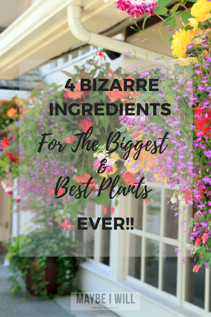 You'll never guess the 4 Bizarre Ingredients that combine to make the best plant food, giving you the biggest and best plants on the block!
