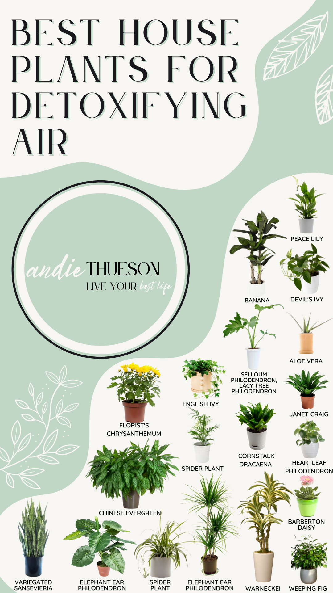 Best House Plants to Detoxify Your Air